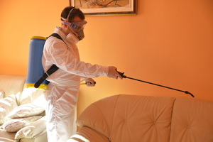 Flea Extermination Warrington