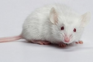 Mouse and Rat Extermination Warrington