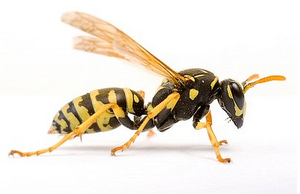 Wasp Extermination Warrington